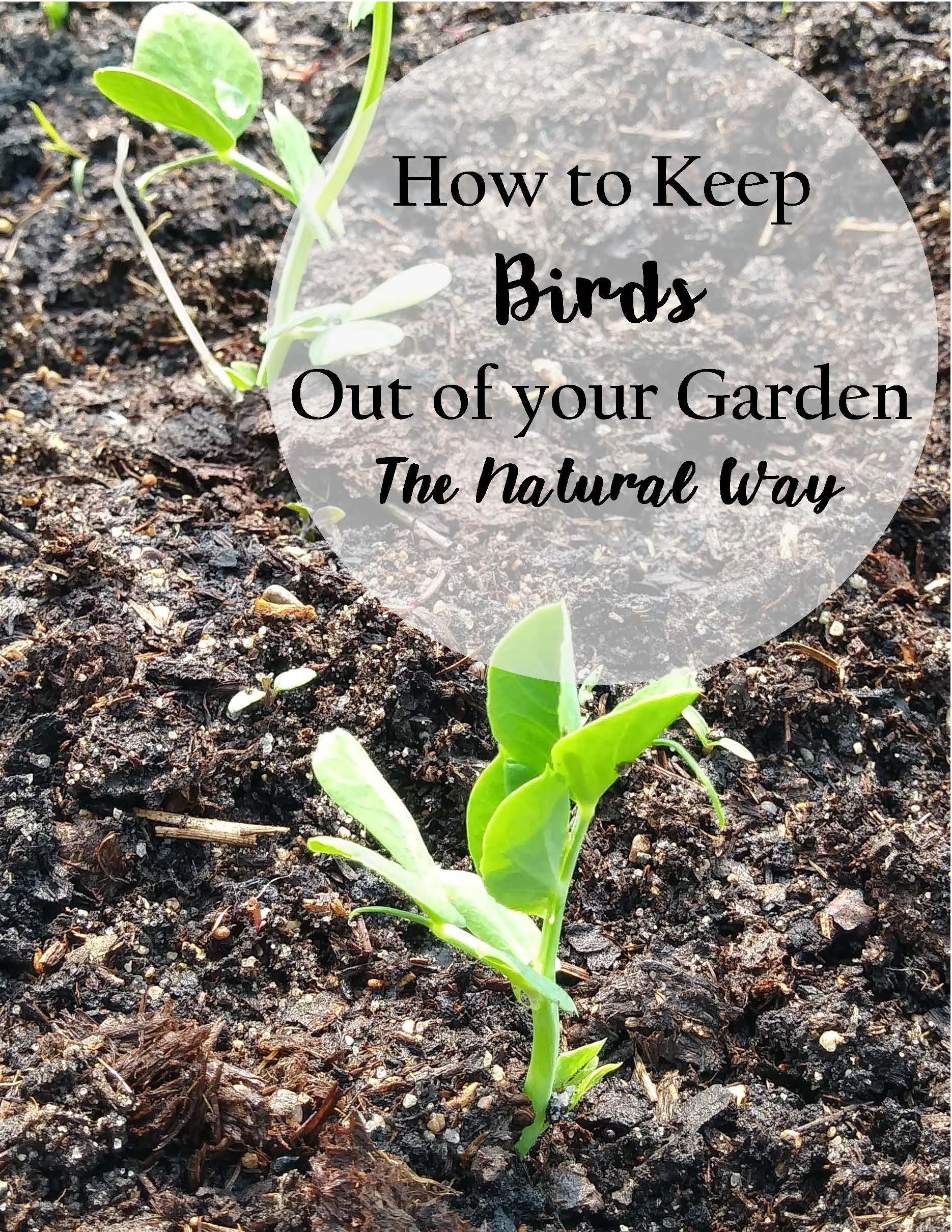 Keeping Rabbits And Birds Out Of Your Garden The Natural Way